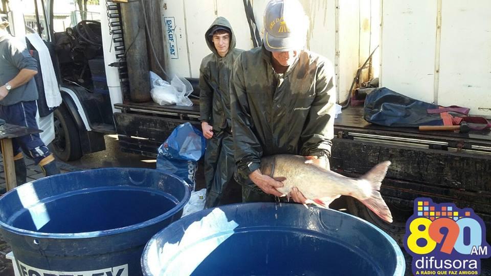 Sábado tem Feira do Peixe Vivo em Bento