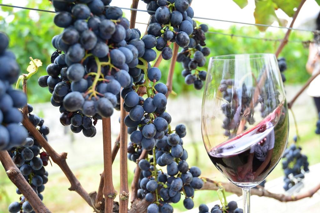 Simpósio Internacional Vinho e Saúde trará especialistas do Brasil e Exterior