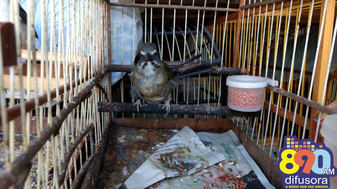 Pássaros silvestres são apreendidos em Guapore e Serafina Corrêa