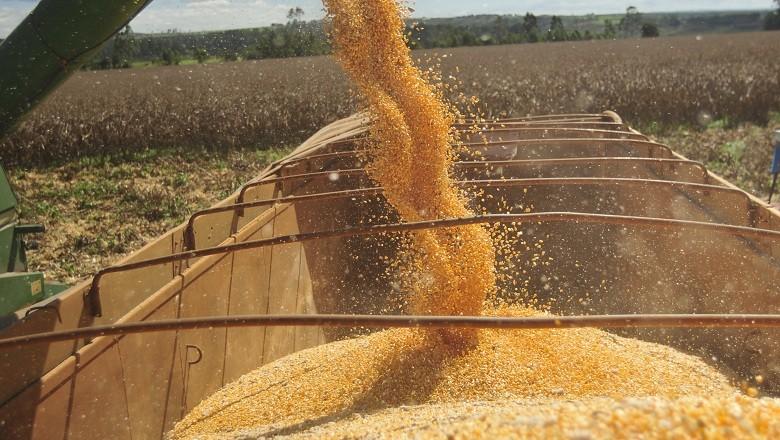 Emater/RS-Ascar atualiza estimativa de perdas pela estiagem da safra de soja e milho