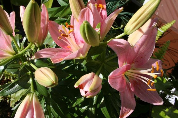 Feira das Flores de Finados ocorre nesta quarta em Bento