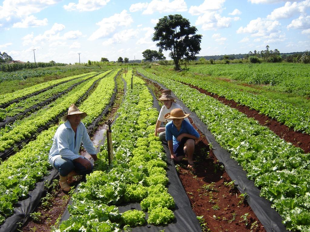 Assentados da reforma agrária recebem sementes de arroz para cultivo no RS