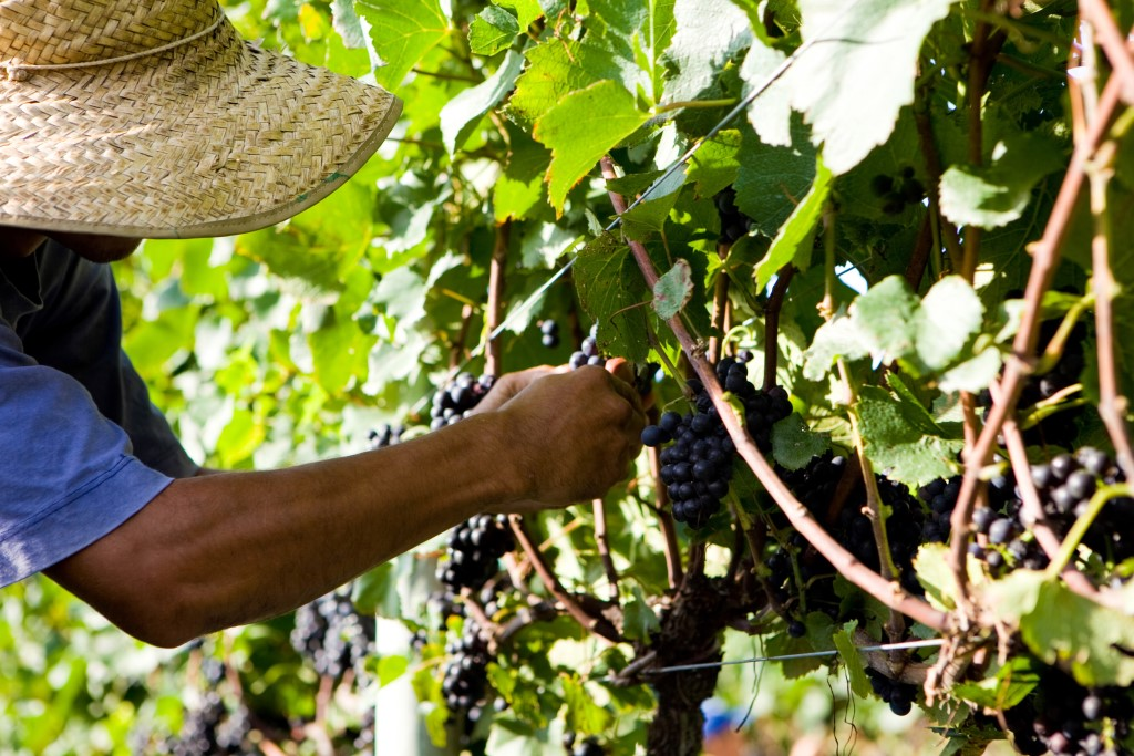 Setor vitivinícola estimula qualificação na 2ª Tecnovitis