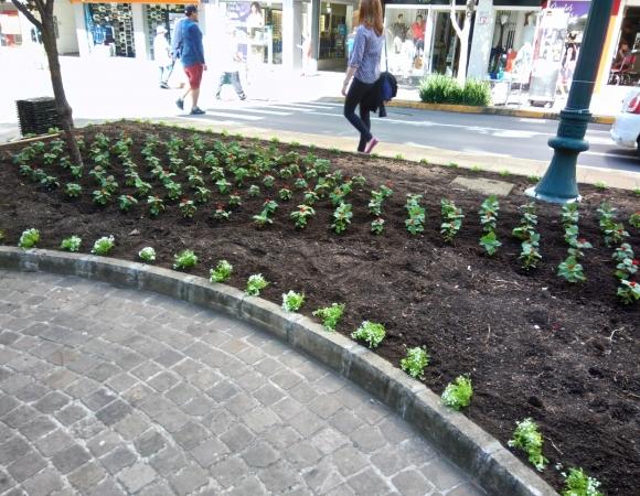 Meio Ambiente planta 4.200 mudas de flores na Via Del Vino em Bento