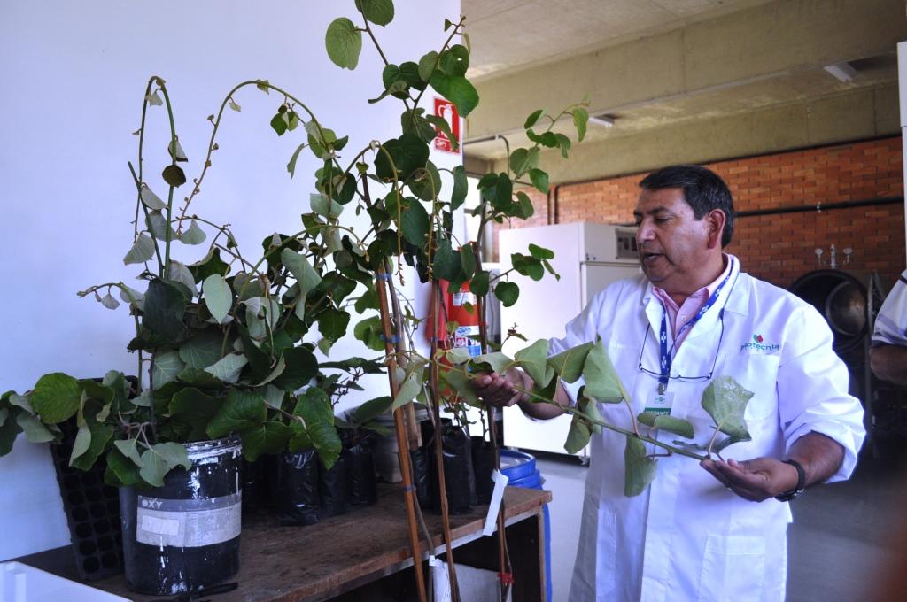 Produção de mudas sadias de quivizeiro pauta curso na Embrapa de Bento