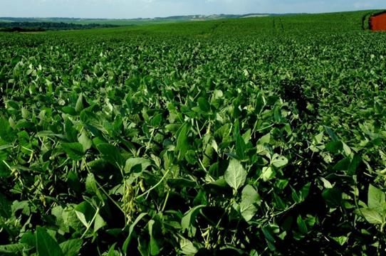 Secretaria da Agricultura institui canais para denúncia de deriva do 2,4-D