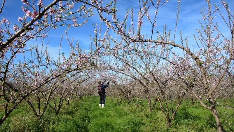 Chegada da primavera exige novo manejo agrícola em lavouras e plantações do RS