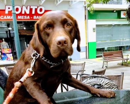 Proprietário de cão ferido em Bento divulga nota na rede social
