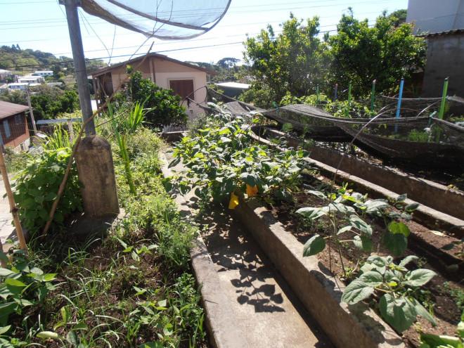 Escolas mantêm hortas diversificadas em Garibaldi