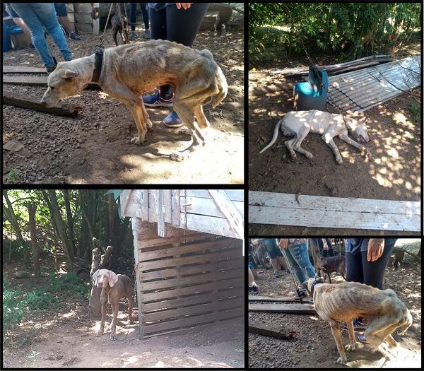 Flagrante de maus tratos a animais é registrado em Veranópolis