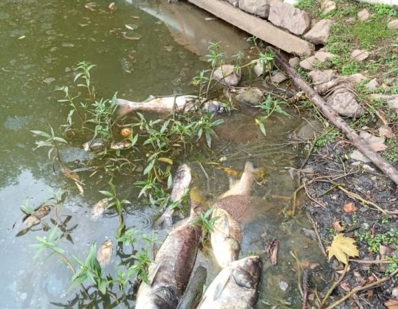 Prefeitura de Bento se manifesta sobre mortandade de peixes no Lago Fasolo