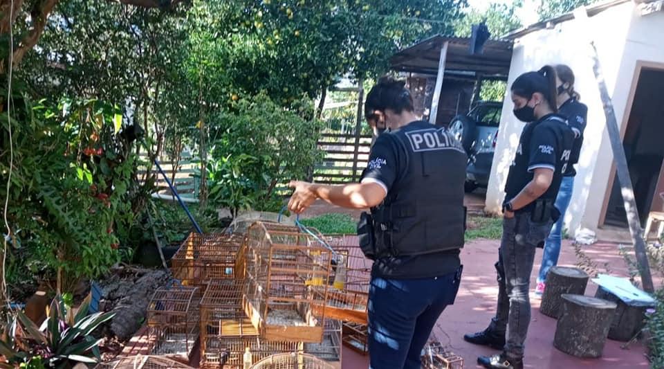 Polícia resgata aves de cativeiros em Dois Lajeados e Guaporé