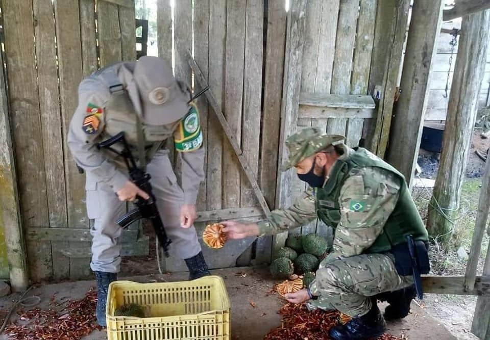 Policiais Militares do 3º BABM de Canela realizam prisão por crime contra a flora em São Francisco de Paula