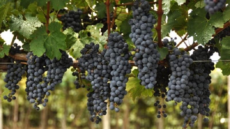 Propostas de alteração da Lei do Vinho serão encaminhadas à Câmara Nacional