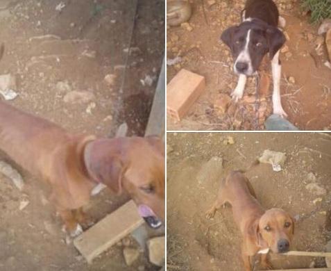 Brigada Militar de Vacaria atende duas ocorrências de maus tratos de animais