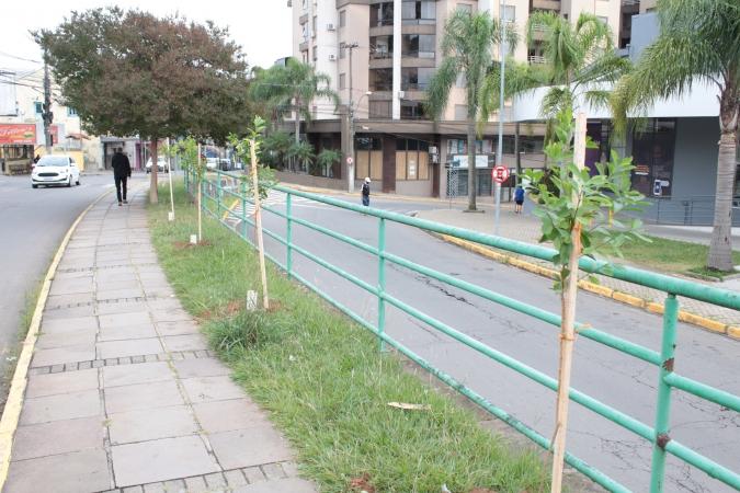 SMMAM inicia plantio de árvores nativas em áreas públicas em Bento
