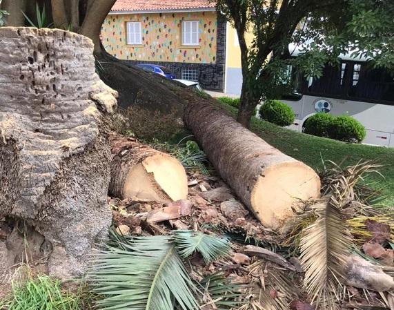Moradores reclamam de corte de árvore sexagenária na Praça do Bairro São Francisco, em Bento