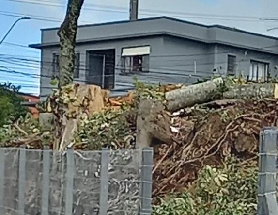 AAECO verifica corte de árvores nativas em terreno no Maria Goretti