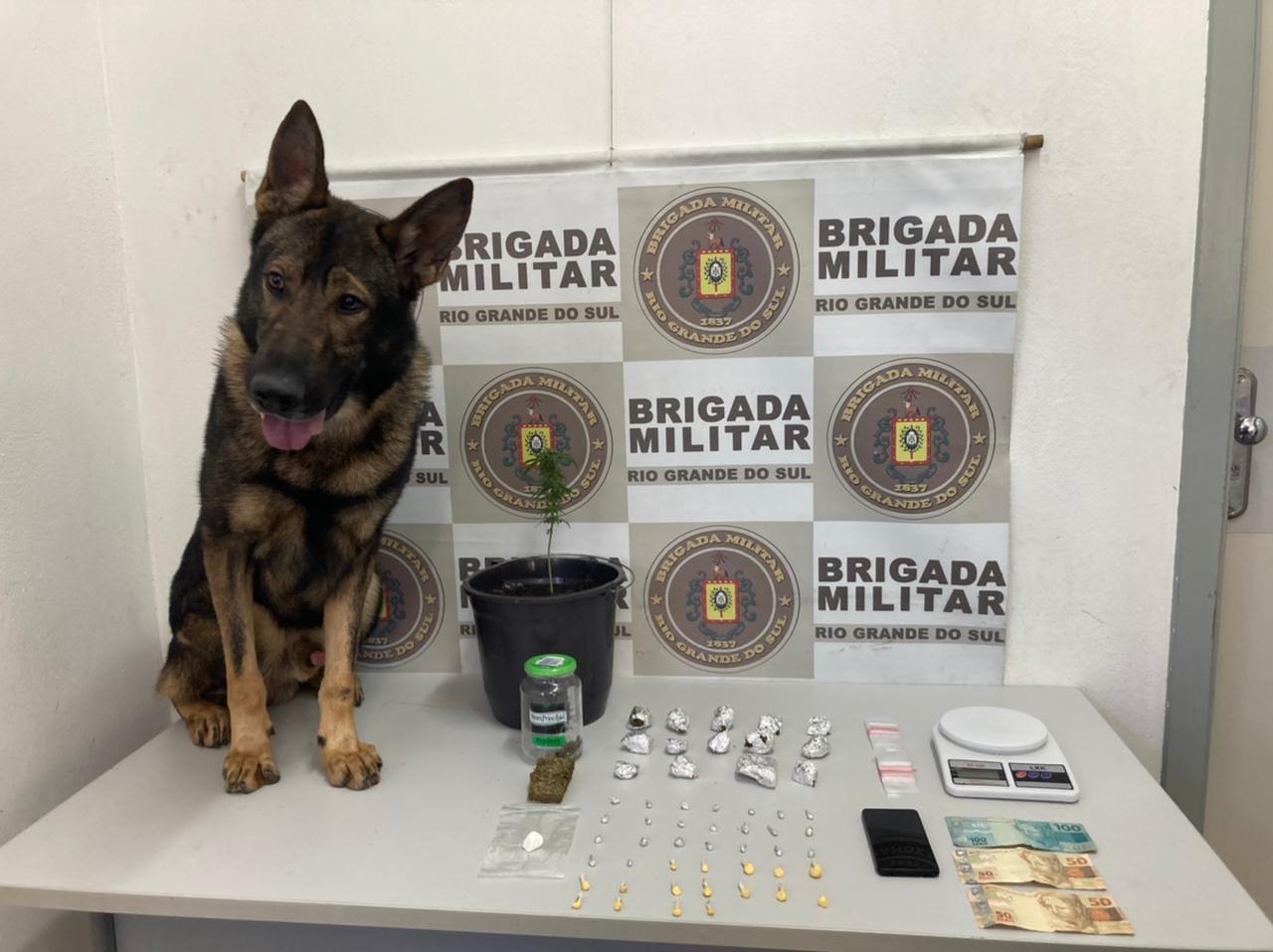 Em ação da BM, Cão Colt localiza drogas em Caxias do Sul