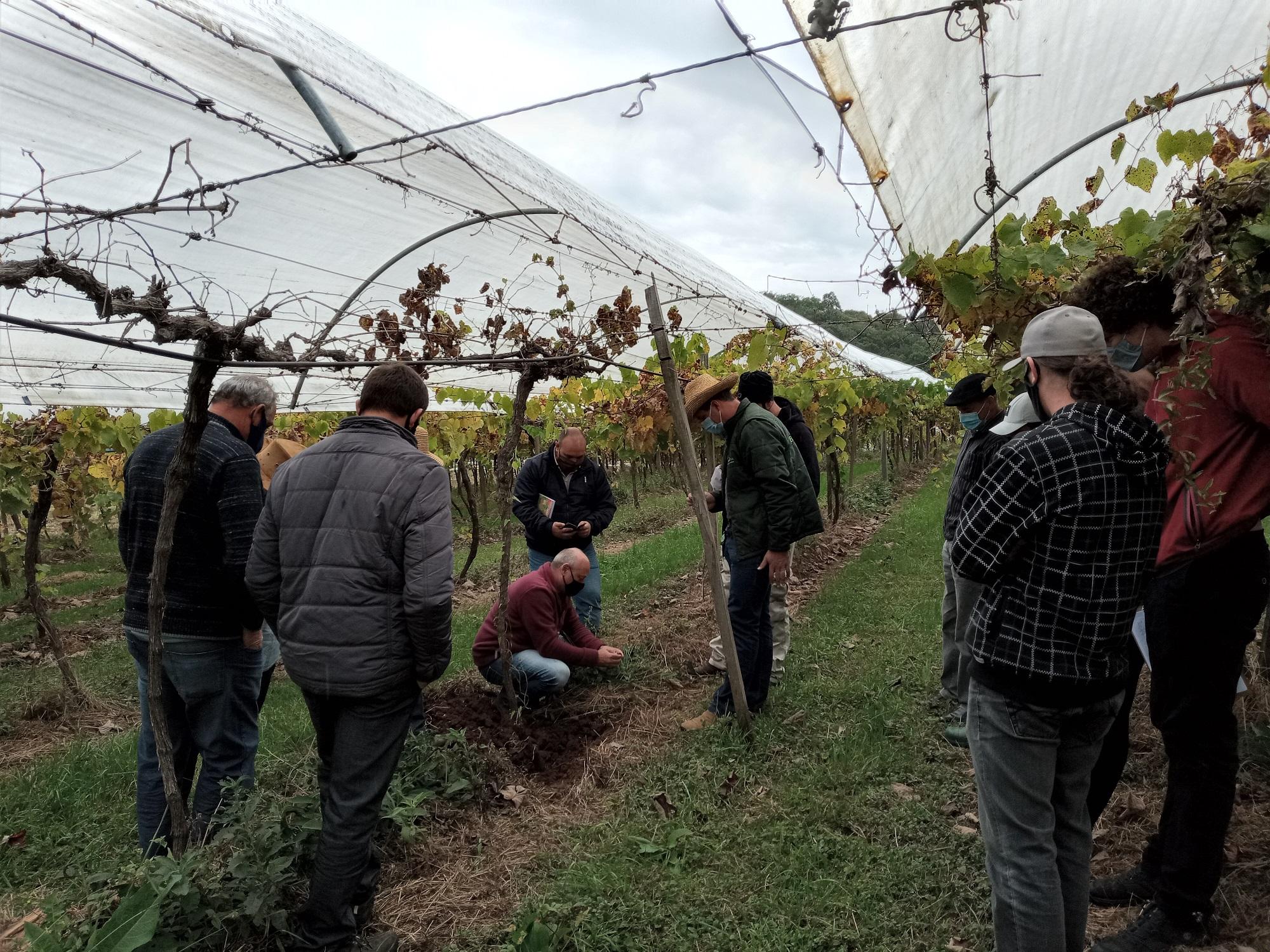 Programa Ater 2021 inicia acompanhamento de 100 famílias de viticultores na Serra Gaúcha