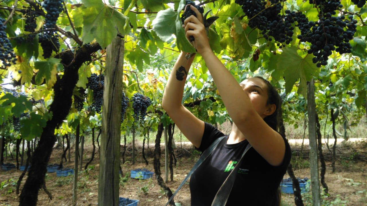 Campus Bento Gonçalves do IFRS abre inscrições para Programa de Residência Agrícola