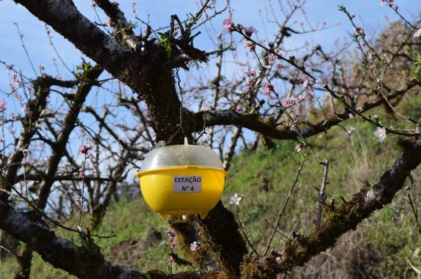 Sistema de alerta dará orientações mensais para produtores de pêssego