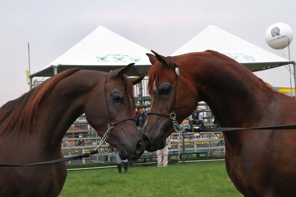 Secretaria da Agricultura divulga regulamento para exposição de animais na Expointer 2021