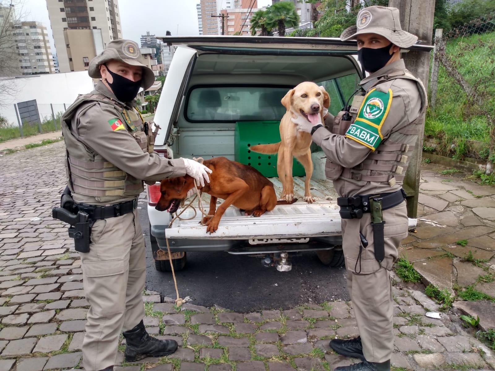 Cães em situação de maus tratos são resgatados pela PATRAM no Conceição, em Bento