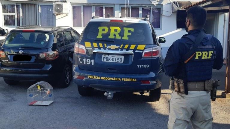 PRF prende casal com carro e passarinhos furtados na BR-470 em Bento