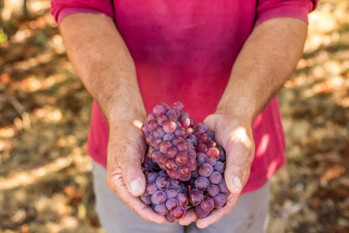 Aberta chamada pública para implantação de Boas Práticas Agrícolas em propriedades vitícolas